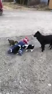 Em bé Nhật bị đàn cún bao vây