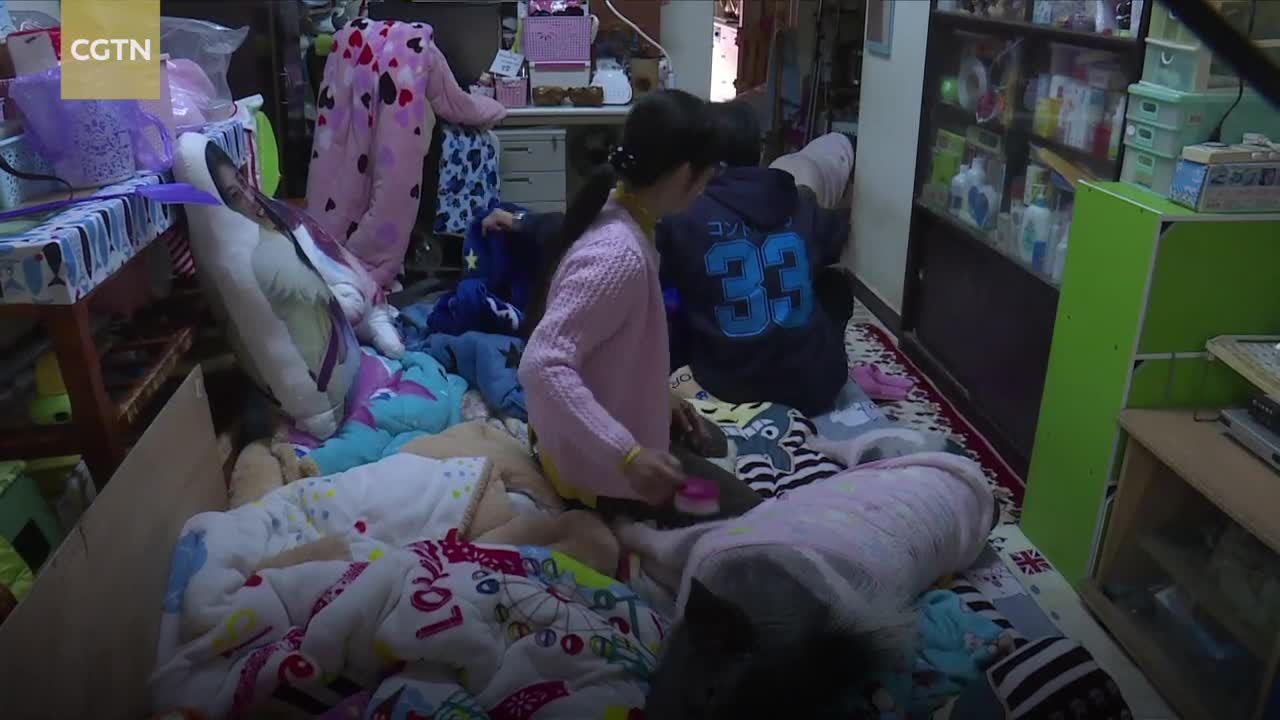 Người phụ nữ Đài Loan ở cùng nhà với 4 con lợn