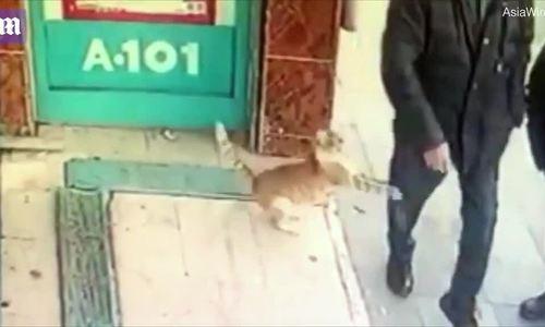 Con mèo hung dữ với chó và đàn ông, hiền lành với phụ nữ và trẻ em
