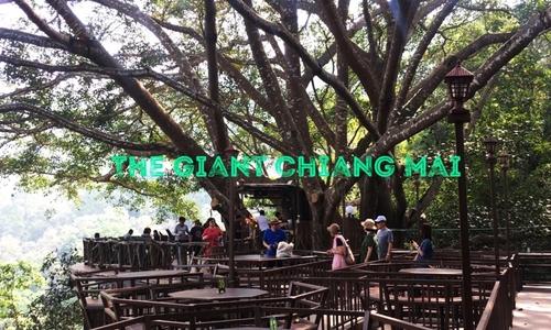 Thưởng thức cà phê giữa rừng ở Chiang Mai