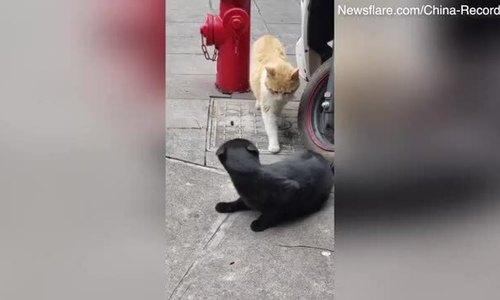 Hai con mèo giật mình vì bị bắt quả tang 'ngoại tình'