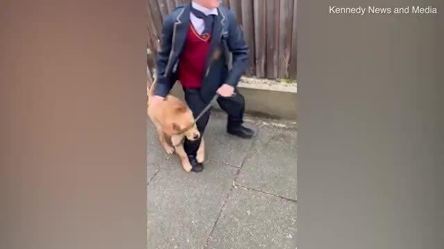 Chú chó ôm chân cậu chủ nhỏ không cho đi học