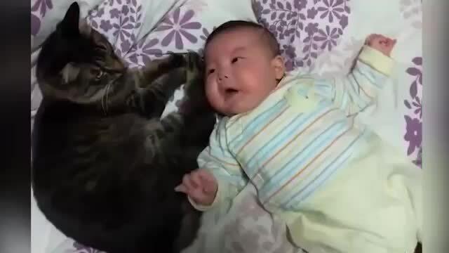 Em bé nín khóc khi được mèo dỗ