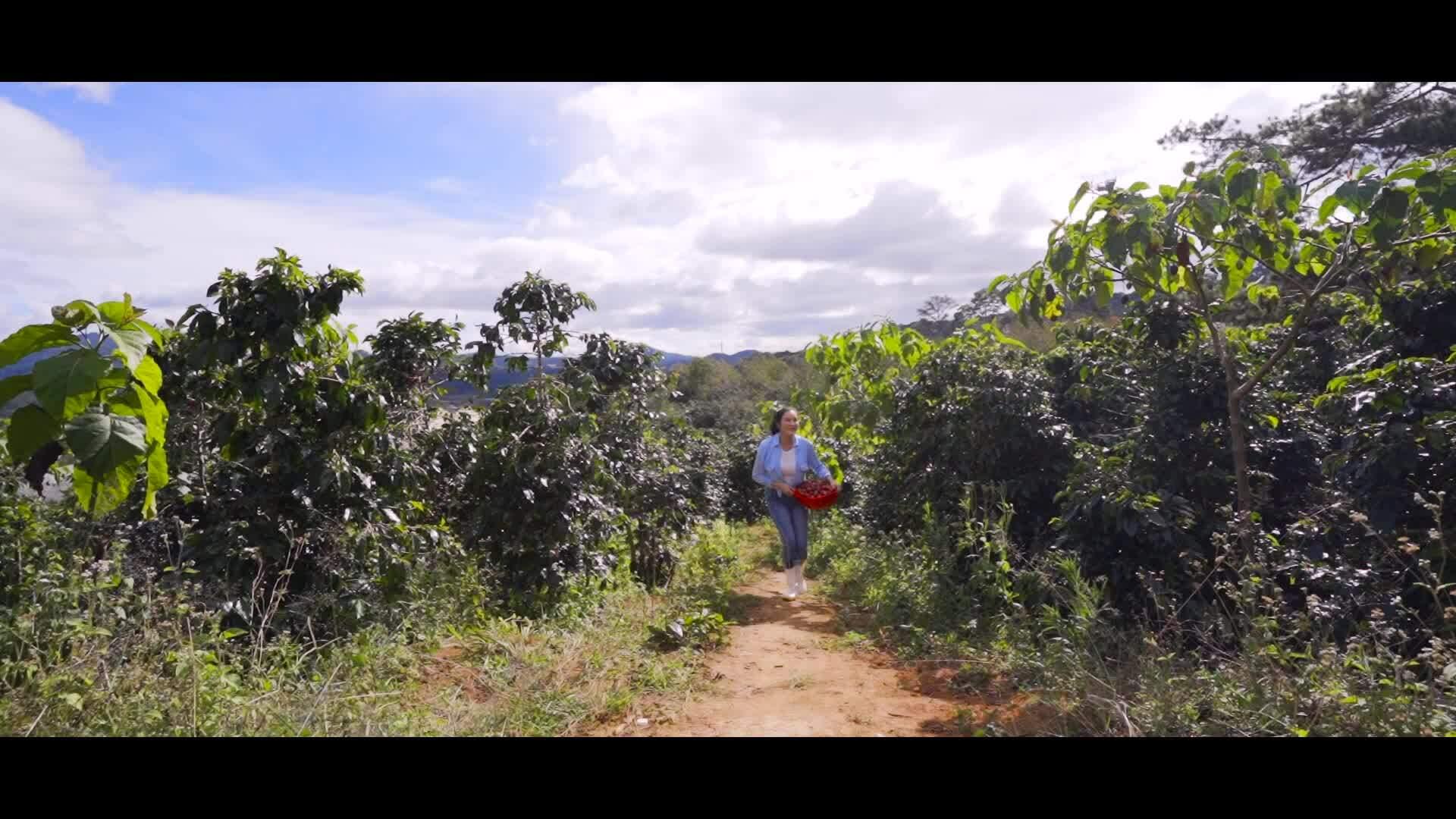 Lý Nhã Kỳ thu hoạch cà chua ở Đà Lạt
