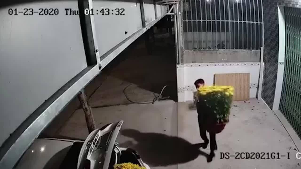 Đi ôtô trộm hoa về chưng Tết