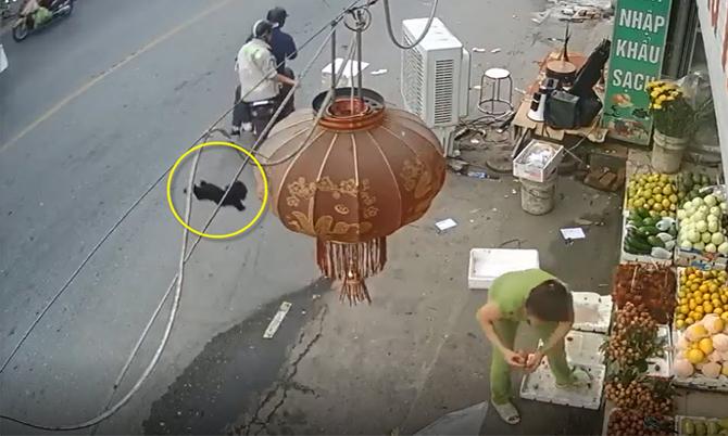 Trộm chó nhanh như chớp ở Hà Nội