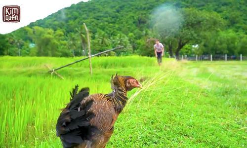 Kim Thư bắt gà, làm món Campuchia