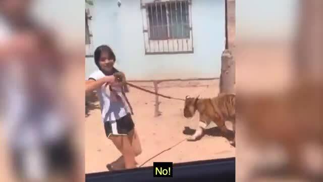 Cô bé dắt hổ đi dạo trên đường