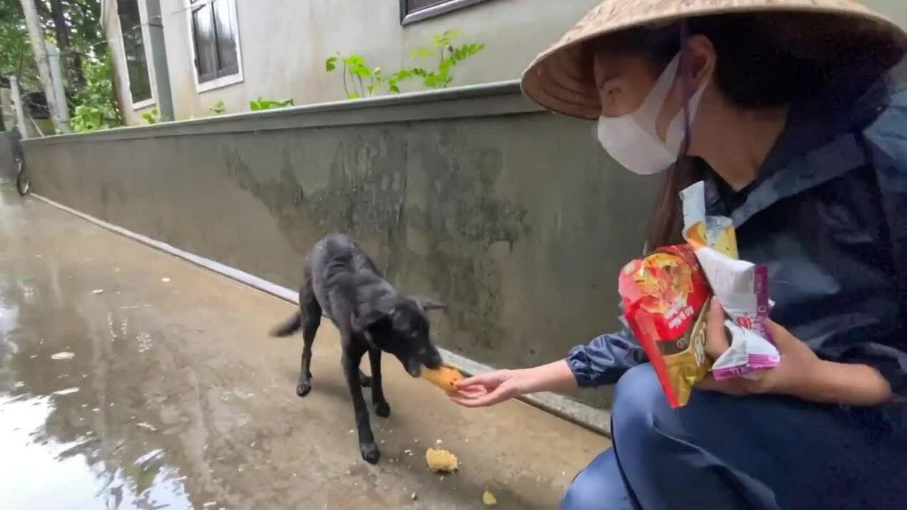Thủy Tiên thương chú chó đói ăn trong mưa lũ