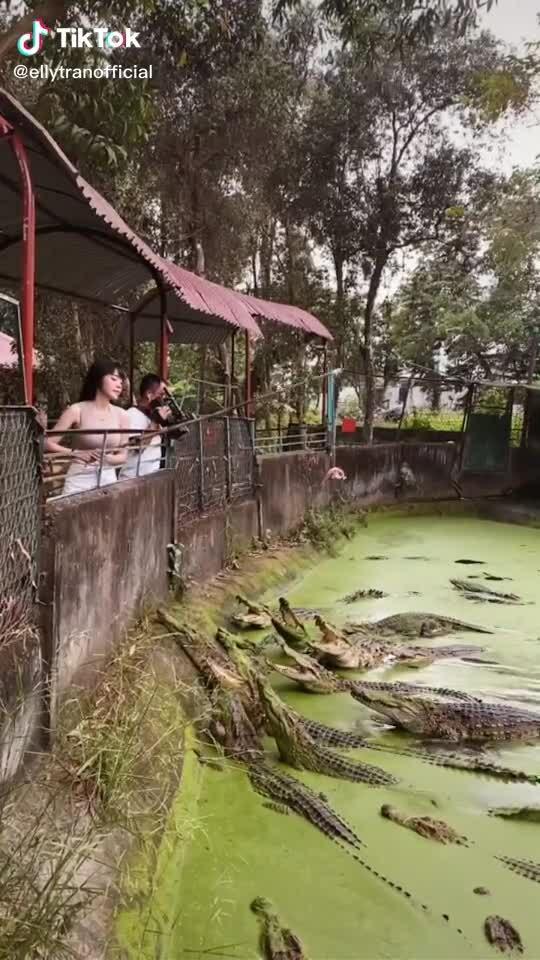Elly Trần câu cá sấu