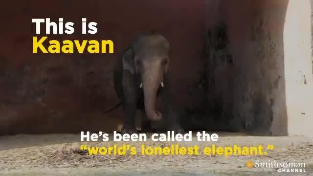 Cher giải cứu 'chú voi cô độc nhất thế giới'