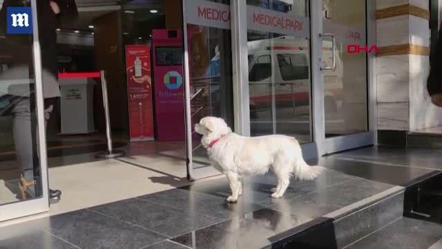 Chó chờ chủ ngoài cổng bệnh viện gần một tuần