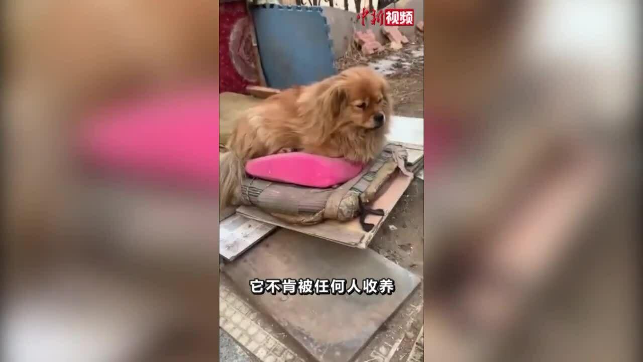 Chó 5 năm chờ chủ đã mất ở bãi đỗ xe