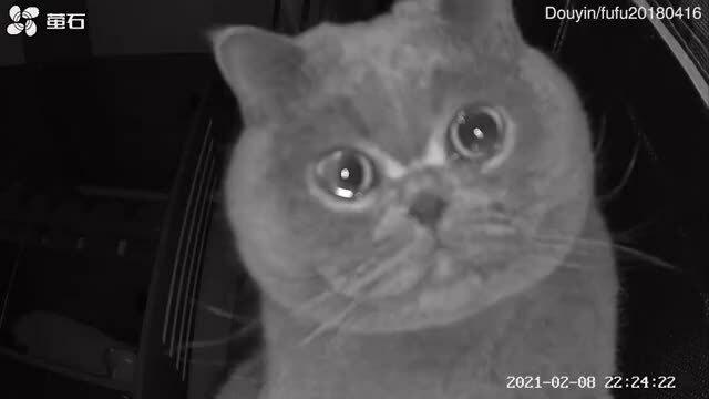 Mèo khóc vì bị bỏ ở nhà khi chủ về quê ăn Tết