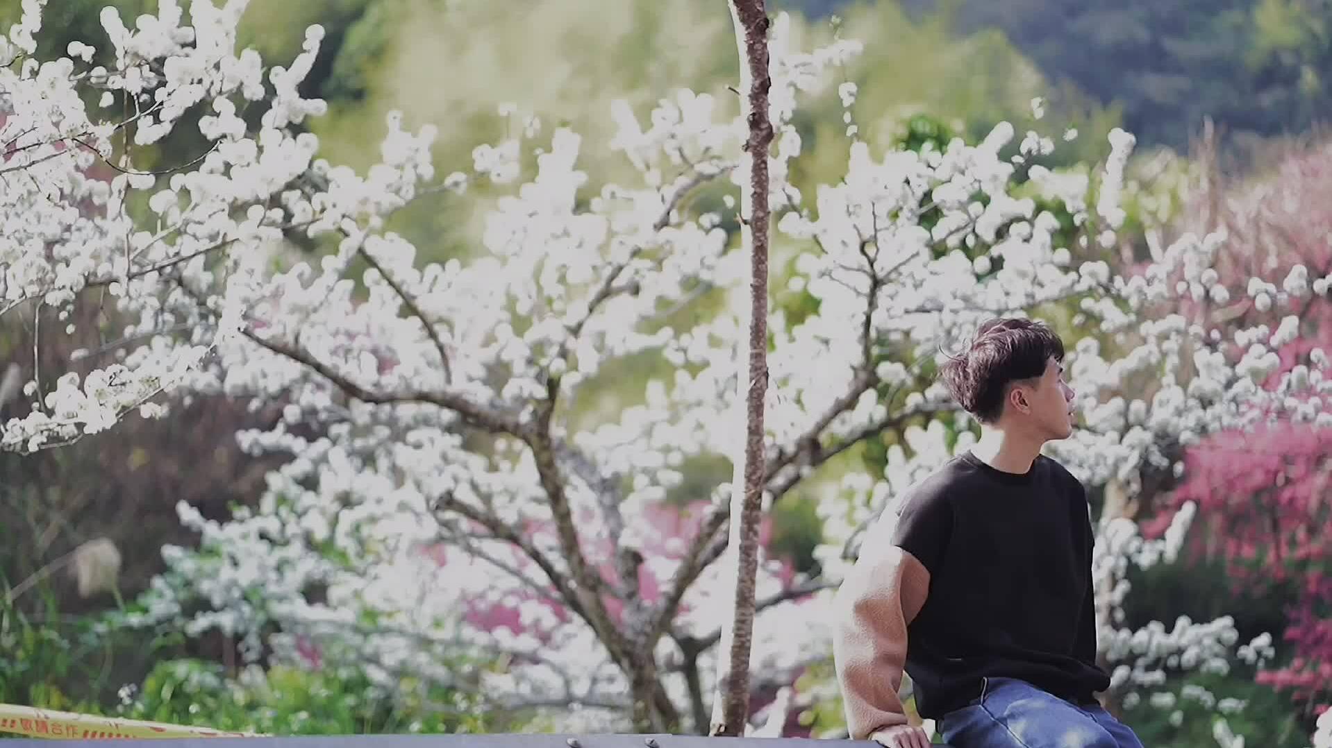 Hoa anh đào Đài Loan