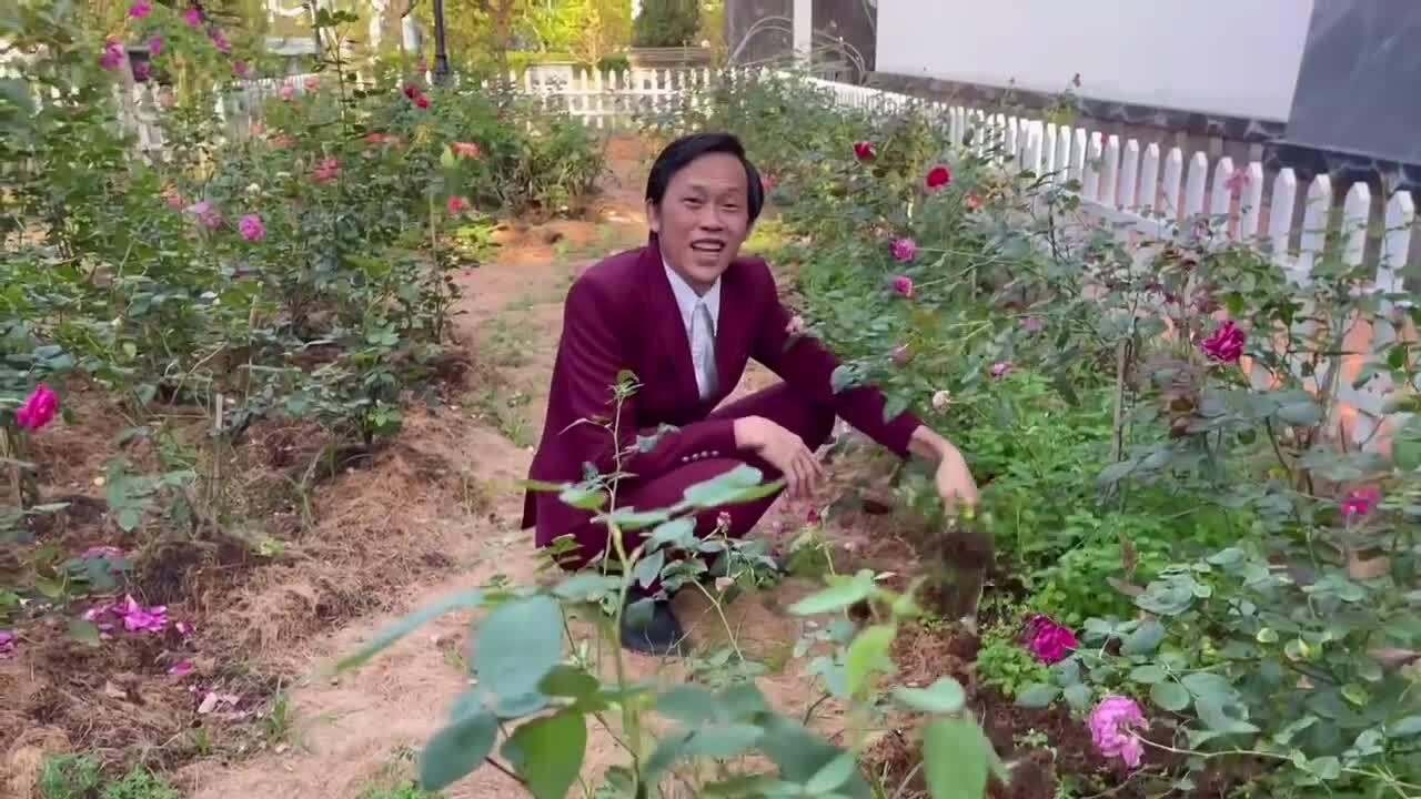 Hoài Linh mặc suit đi nhổ cỏ vườn