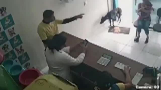 Chó hoang bị ốm tự vào phòng khám thú y