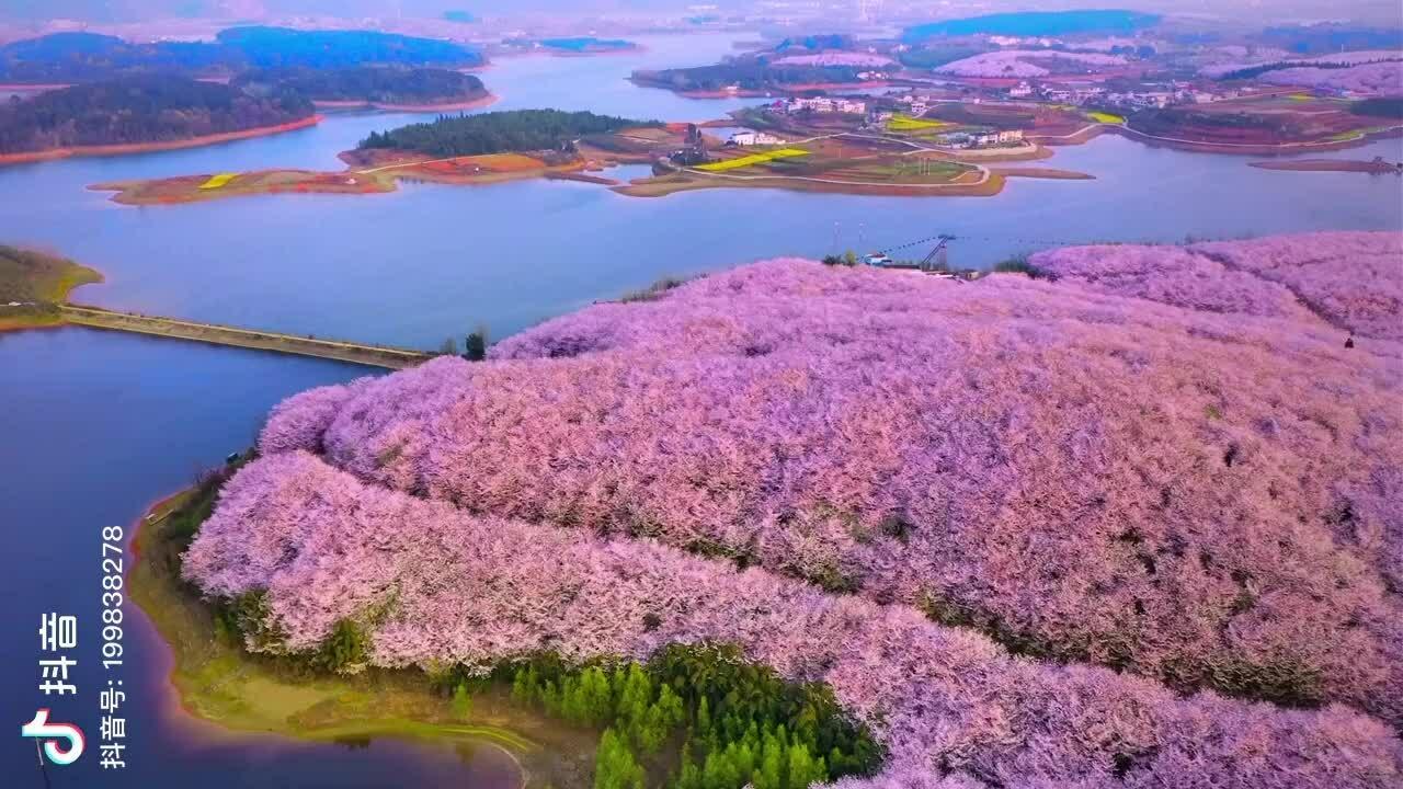 Mùa xuân ngập tràn hòn đảo đào hoa