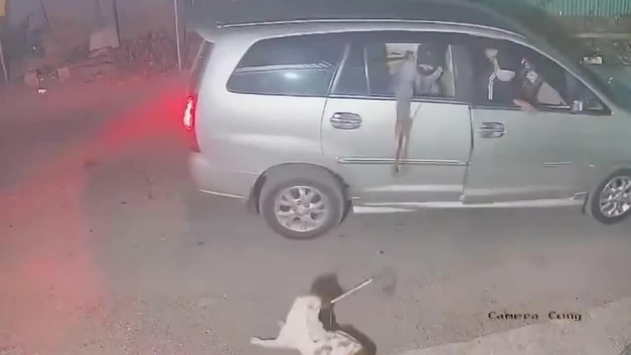 Nhóm cẩu tặc đi ôtô trộm chó