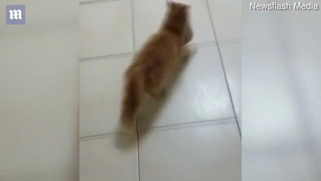 Mèo mẹ tự tha con đến bệnh viện khám mắt