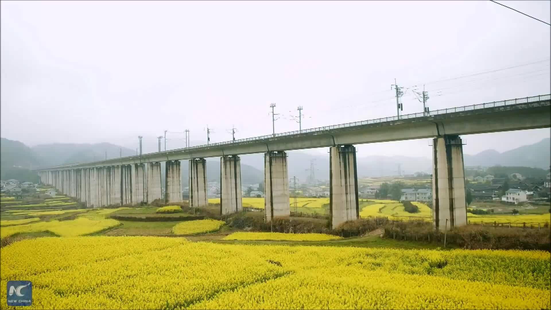 Tuyến đường sắt chạy qua cánh đồng hoa cải vàng