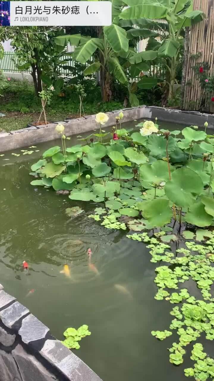 Vườn Bạc Liêu 2.500 m2 phong cách Lý Tử Thất