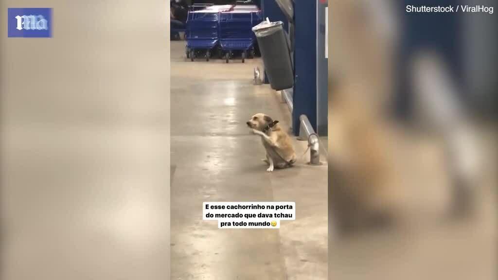 Cún con vẫy chào khách đến siêu thị mua sắm ở Brazil