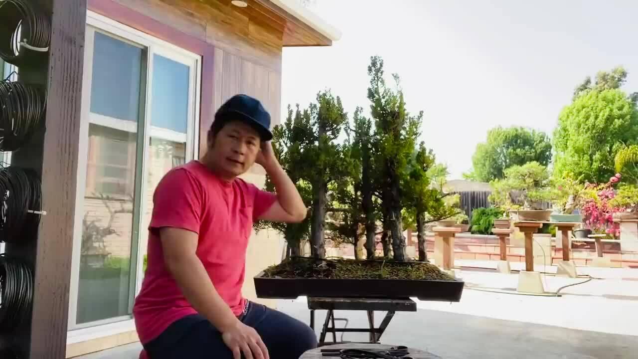 Bằng Kiều chăm vườn bonsai