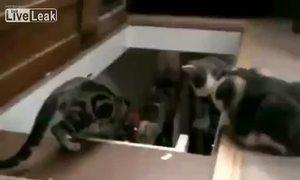 Con mèo láu cá giơ chân hất bạn