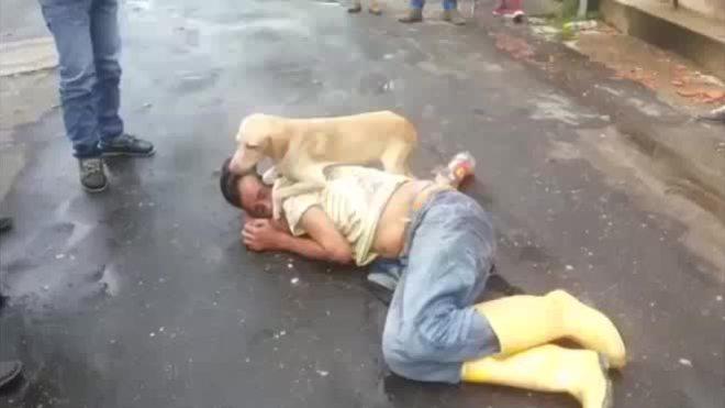 Chó bảo vệ chủ say xin