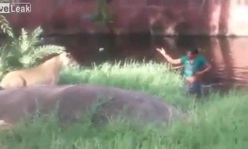 Say rượu đứng cãi nhau với sư tử