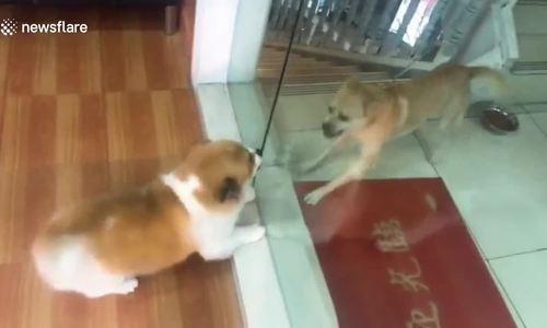 Phản ứng trái ngược của hai chú chó sau khi mở cửa kính