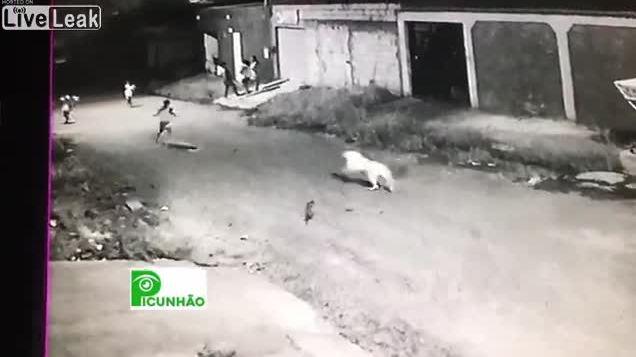 Chó bitbull tấn công bé gái