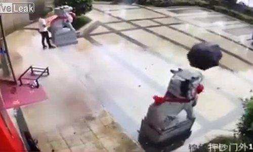 Bắt ô trong cơn gió như ninja