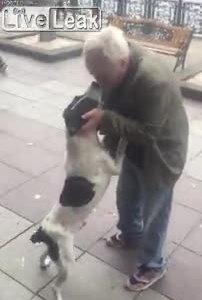 Chủ tìm được chó sau hơn ba năm