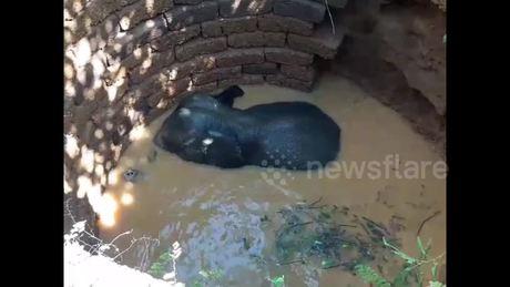 Giải cứu con voi rơi xuống giếng sâu 10 mét