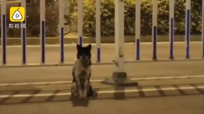 Chú chó ngồi trên đường đợi chủ đã mất hơn 80 ngày