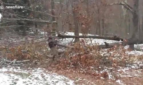 Tai nạn khi cưa cây