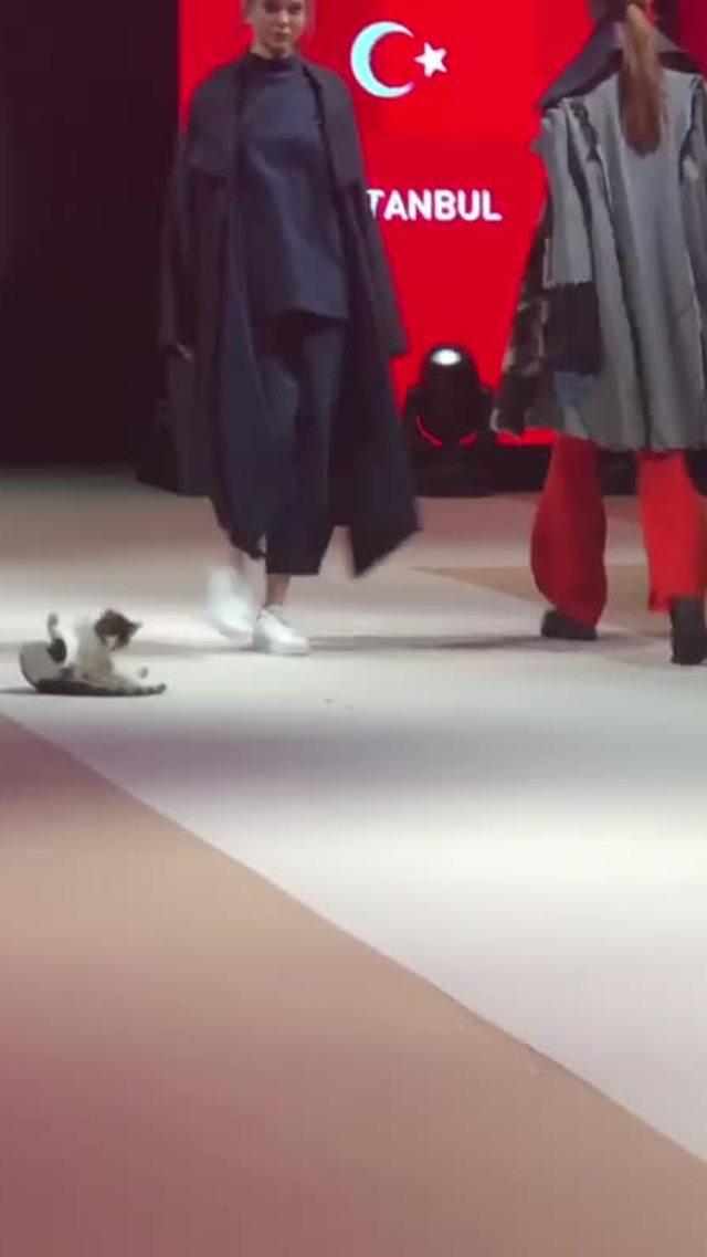 Chú mèo chiếm show thời trang