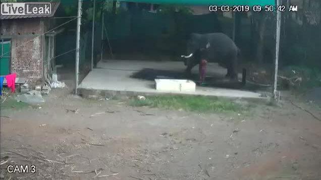 Cậu bé bị voi đè khi đang tắm