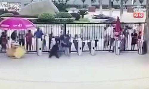 Khỉ đột tấn công người