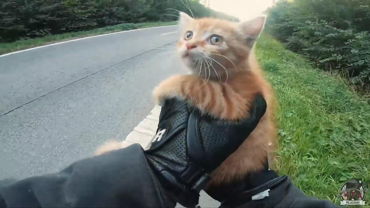 Biker cứu mèo