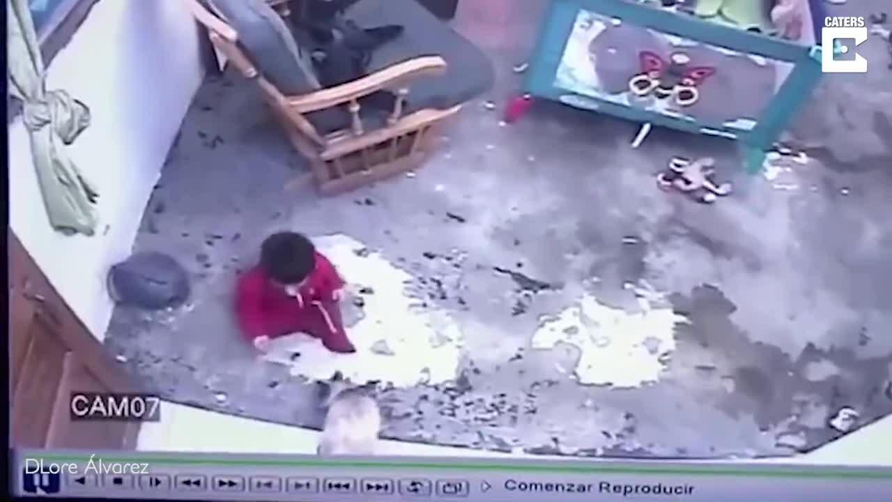 Mèo cứu cậu bé khỏi ngã cầu thang