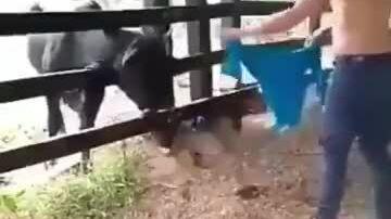 'Lãnh đủ' vì đùa với bò