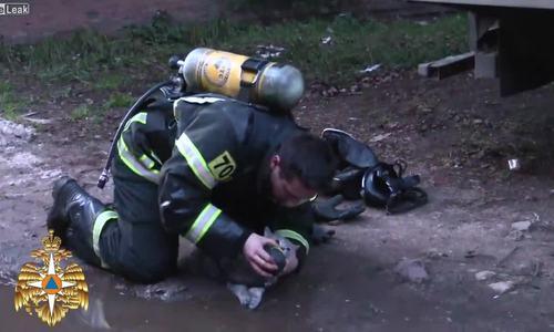Video lính cứu hỏa cứu mèo nhận triệu lượt xem