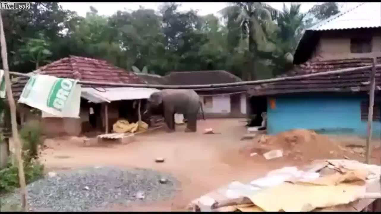 Voi vào làng kiếm thức ăn