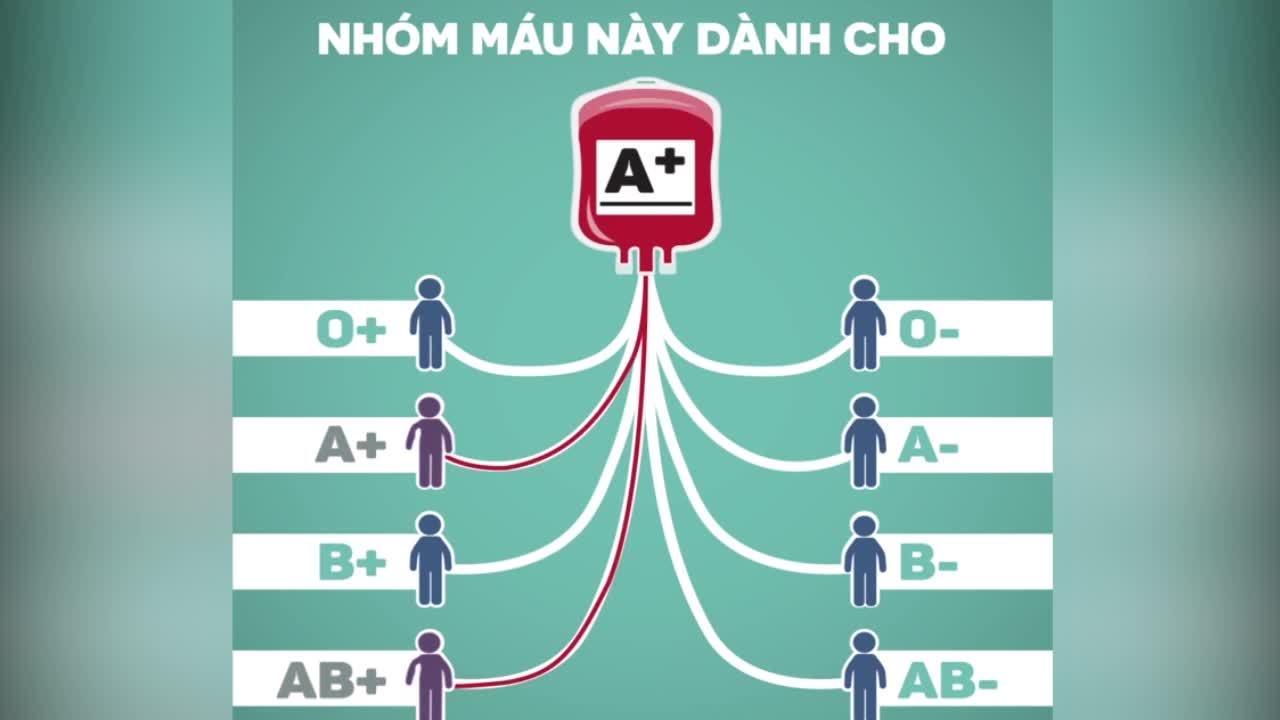 Các nhóm máu nào truyền được cho nhau