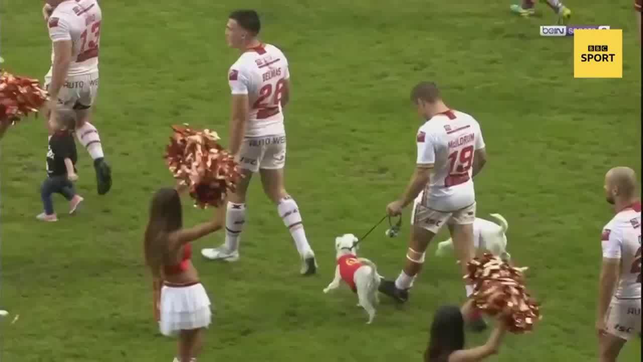 Sao bóng bầu dục cho chó ra sân thi đấu