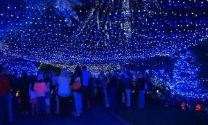 Khu vườn Noel lập kỷ lục thế giới