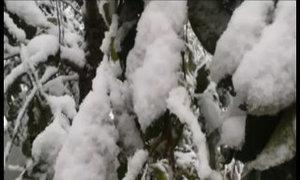 Du khách háo hức với cảnh tuyết rơi ngập Sapa